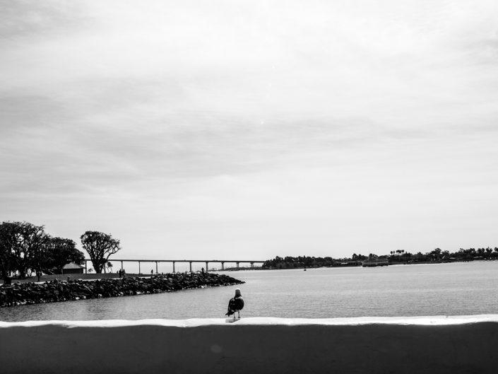 Möwe schaut auf Brücke nach Coronado